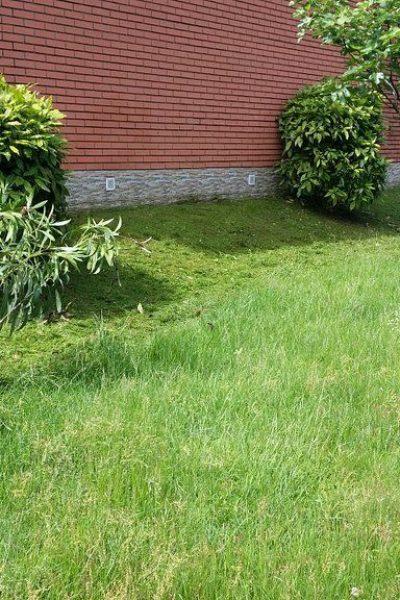 sempreverde_giardini-15