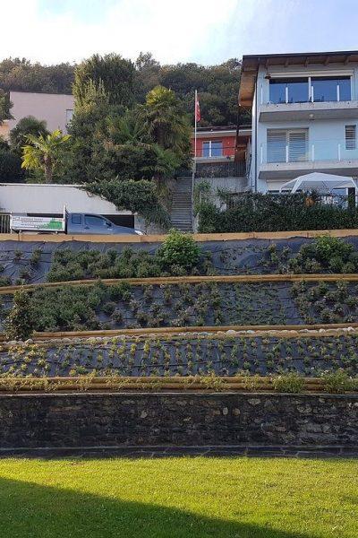 sempreverde_giardini-21