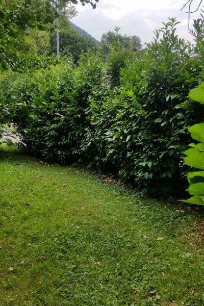 sempreverde_giardini-7